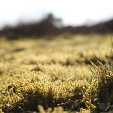 natuur_fotografie_foto_natuurfotografie_mos_drenthe