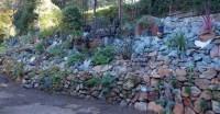 succulents | Gardening Tips for the Santa Cruz Mountains ...