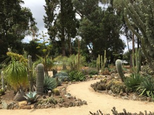 cactus_garden_path.1280