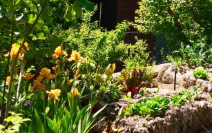 straw_bale_veggie_garden_Ghio_bearded_iris