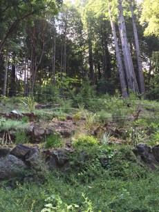 hillside_june2016