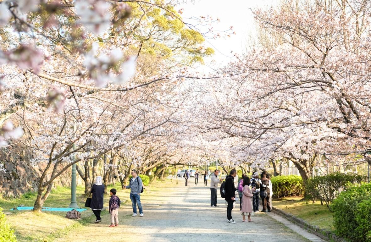 Hanami - Flower Viewing in Hakata, Fukuoka