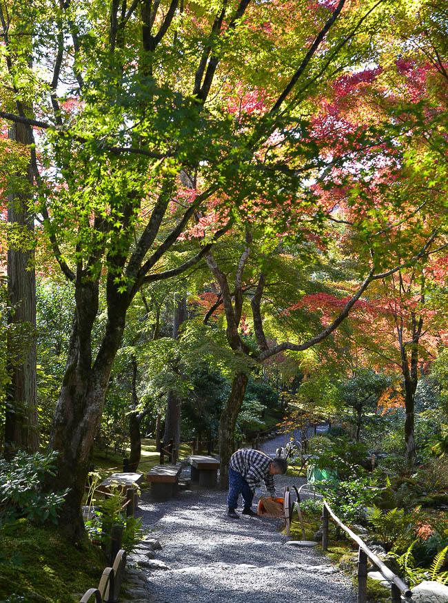 Autumn Color Report 2014: Kyoto Report