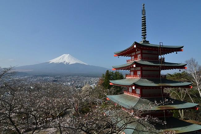 Falling Cherry Blossoms Wallpaper Cherry Blossom Report 2013 Mount Fuji Report