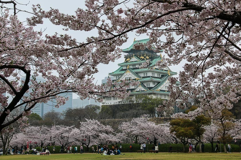 Falling Cherry Blossoms Wallpaper Cherry Blossom Reports 2017 Osaka Full Bloom