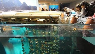 Miyajima Travel: Aquarium