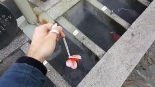 Expérimentez la cuisine dans un onsen à Yumura !