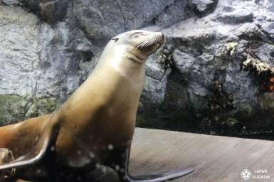 Aquarium-osaka-kaiyukan-08
