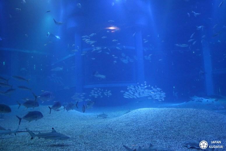 Aquarium-osaka-kaiyukan-11