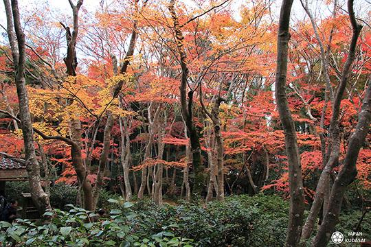 Giou-ji-arashiyama-kyoto (11)