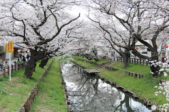 kawagoe sakura printemps