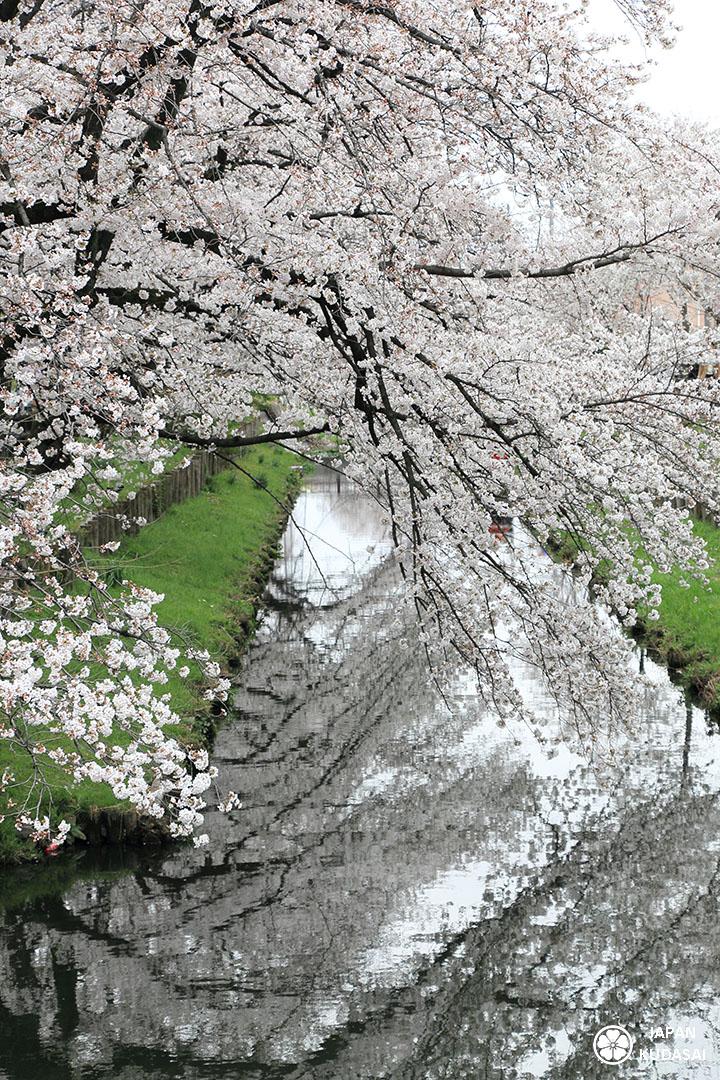 zoom arbres symetrie japon