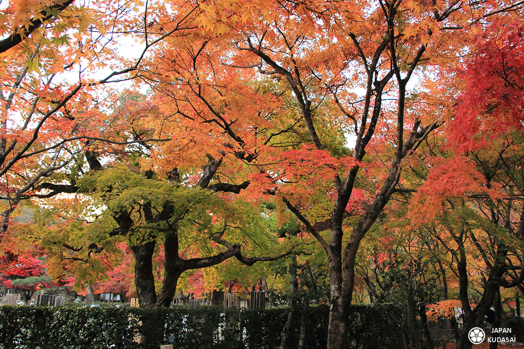 érables japonais temple kyoto