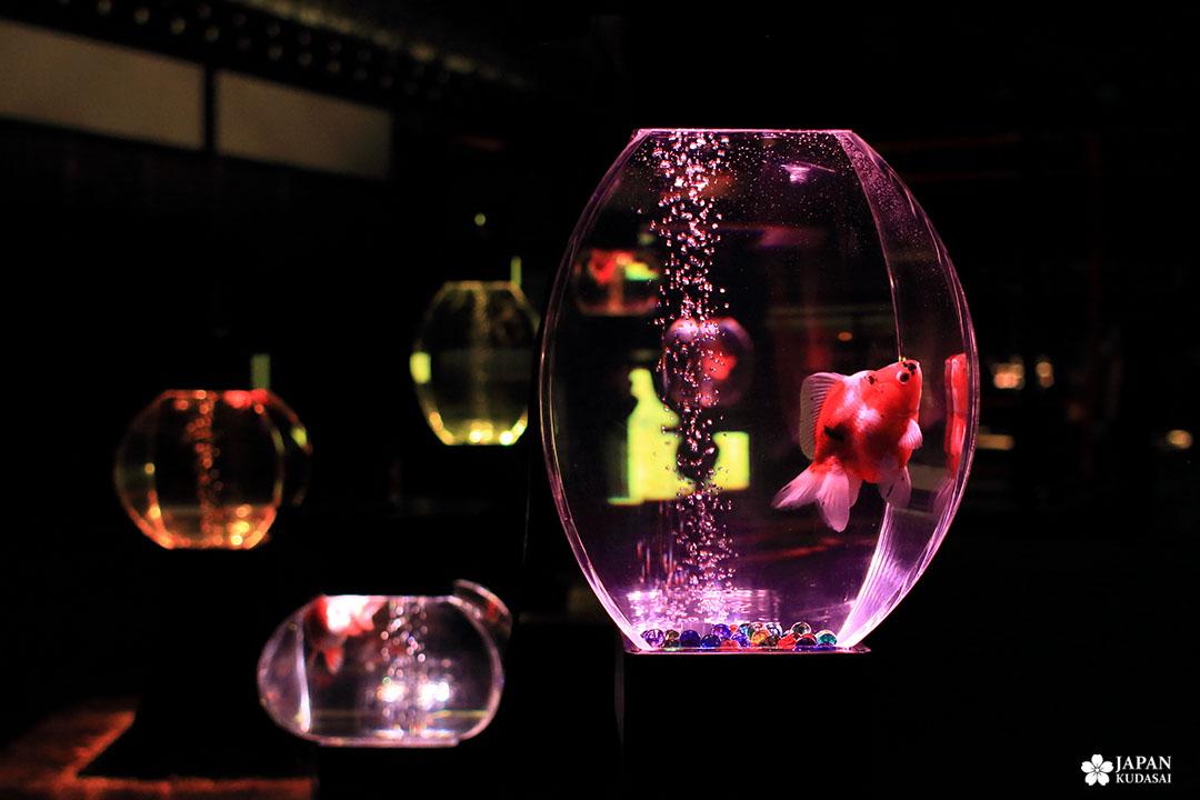 aquarium lanterne poisson rouge billes de verre lumière rose