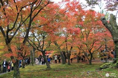 automne-kyoto-temple-tofukuji (15)