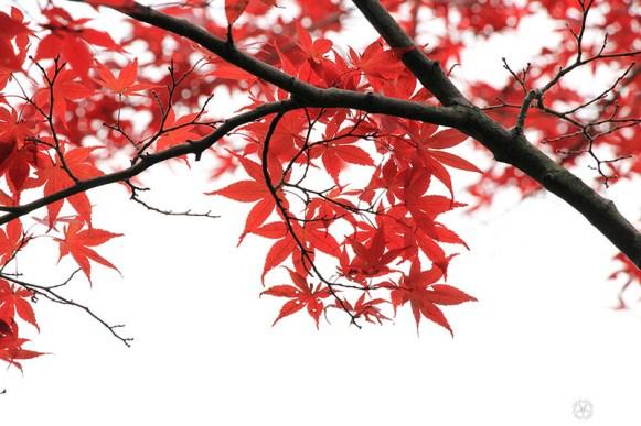 automne-kyoto-temple-tofukuji (25)