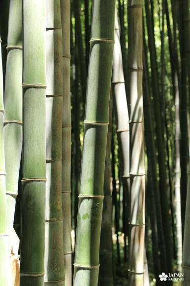 bambouseraie-en-cevennes (57)