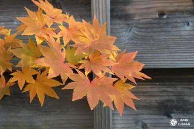 feuilles-automne-04