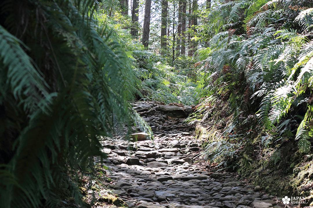 chemin de randonnée fushigami-oji