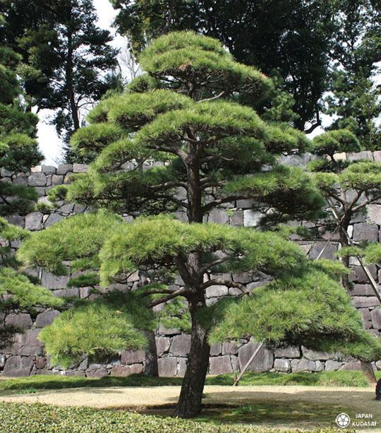jardin-imperial-tokyo-03