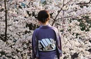 «Keage incline» : la voie ferrée aux cerisiers de Kyoto