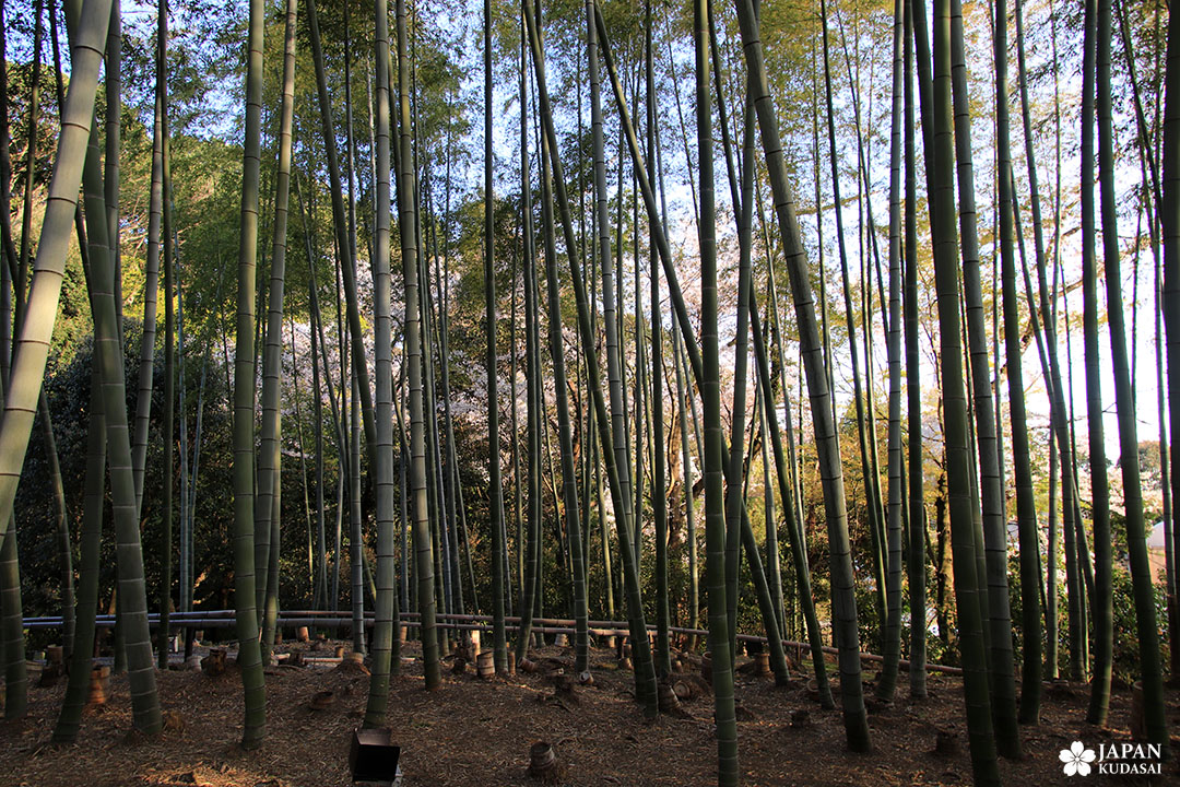 bambouseraie kodai ji kyoto