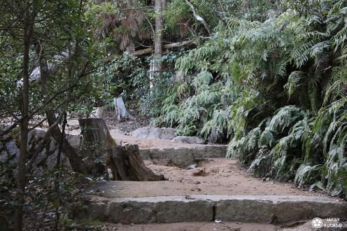 chemin de randnnée au mont misen à miyajima