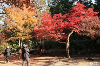 parc momijidani téléphérique mont misen miyajima