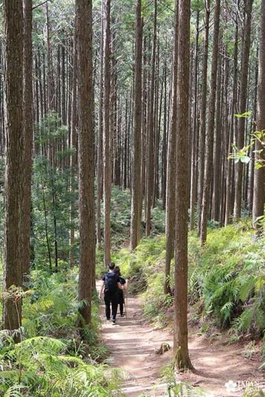 Randonnée sur les sentiers de wakayama - japon