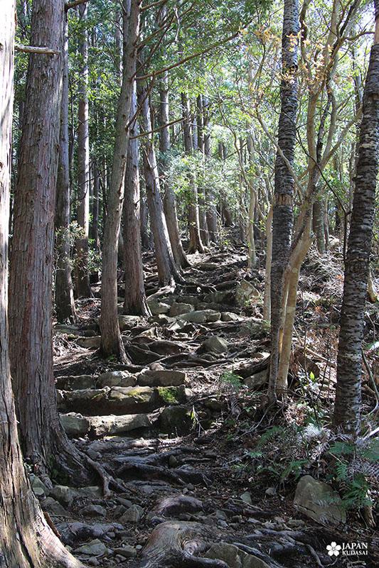 takijiri-oji kumano kodo (12)