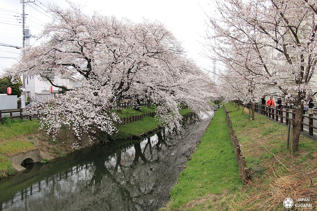 Canal de Kawagoe