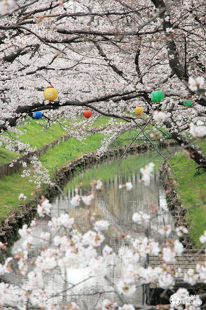 Kawagoe au printemps