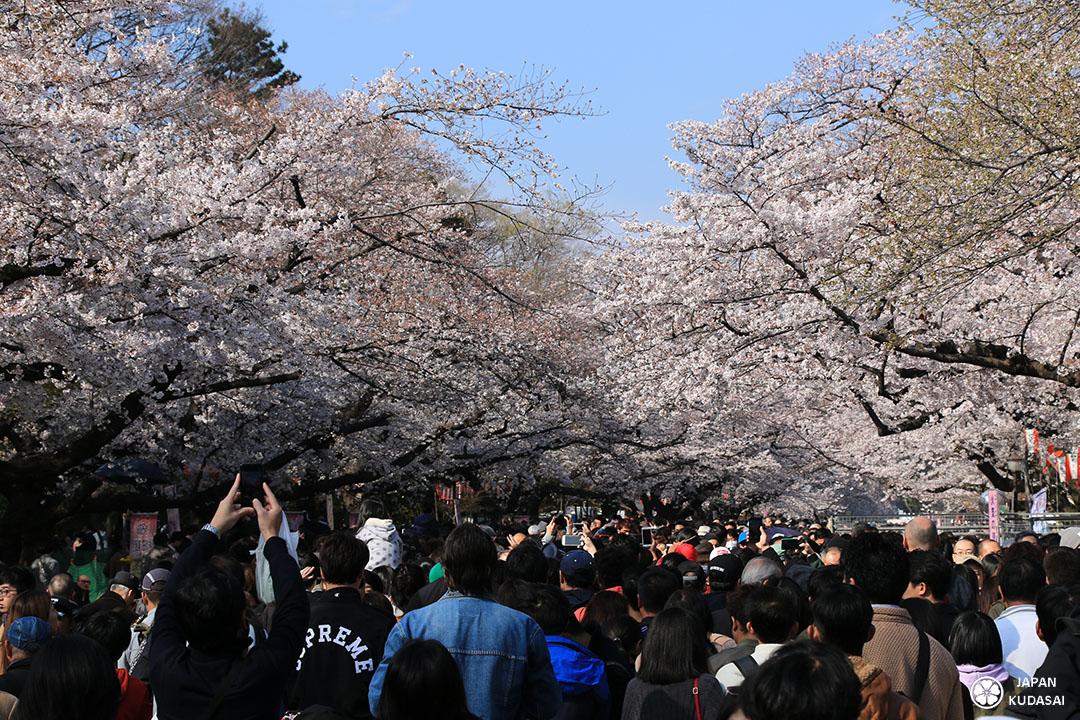 la foule a ueno park pour les sakuras en plein week-end