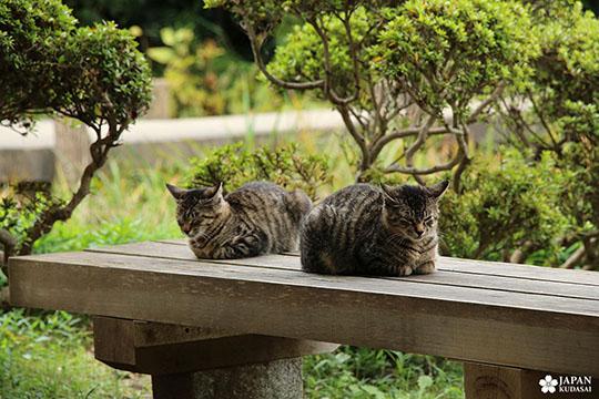 yokohama-sankei-en (2)