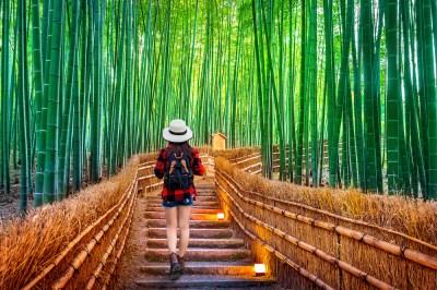Kyoto City   Kyoto Travel Guide