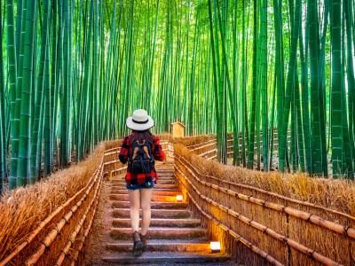 Kyoto Highlights and Hidden Gems Itinerary