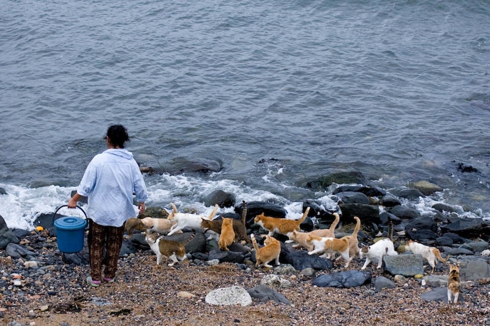 Tashiro-jima (Cat Island)