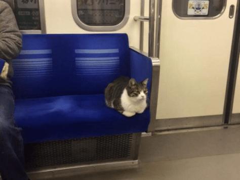 cat train1