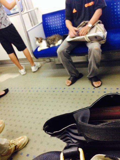 cat train2