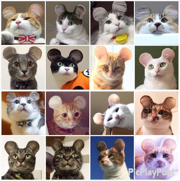 cat_mouse_ears collage