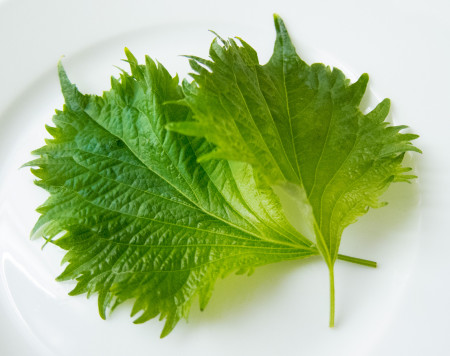 Shiso leaf  Japanese Food and Wine