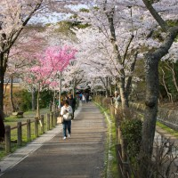 Places to visit in Kyoto - Philosopher's path
