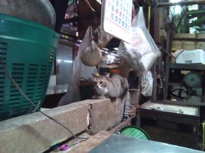 クロントゥーイ市場の猫