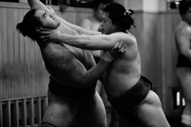 ALF_8498_sumo-small