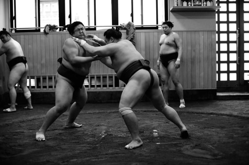 ALF_8595_sumo-small