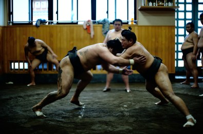 ALF_8653_sumo-small