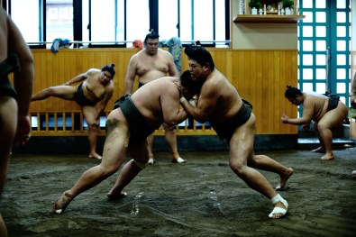 ALF_8664_sumo-small