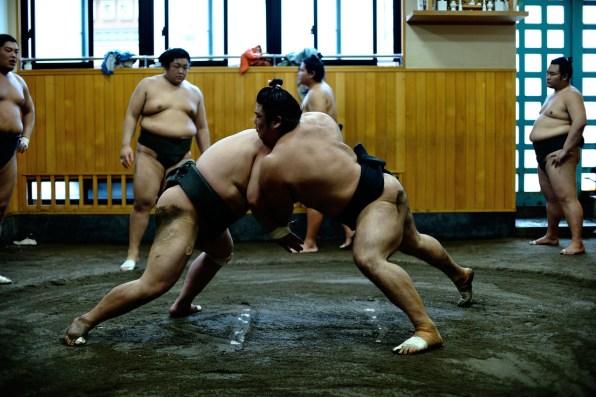 ALF_8666_sumo-small