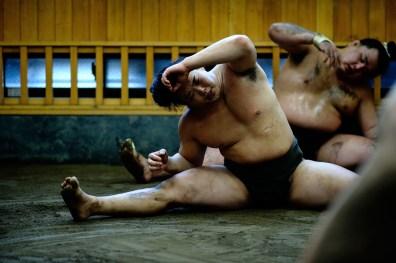 ALF_8750_sumo-small