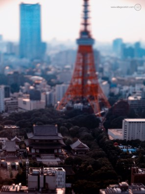 www-AG-tokyo-dinkytown_9335759a